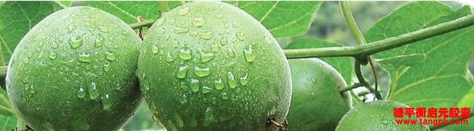 罗汉果提取物 - 标准化罗汉果提取物,健康天然的甜味剂