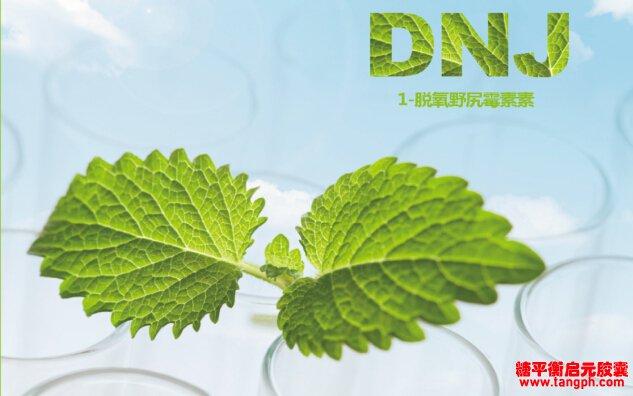 选择DNJ,认准希尔药业桑叶提取物